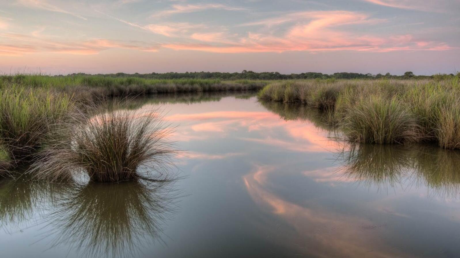 Pine Island marshes.