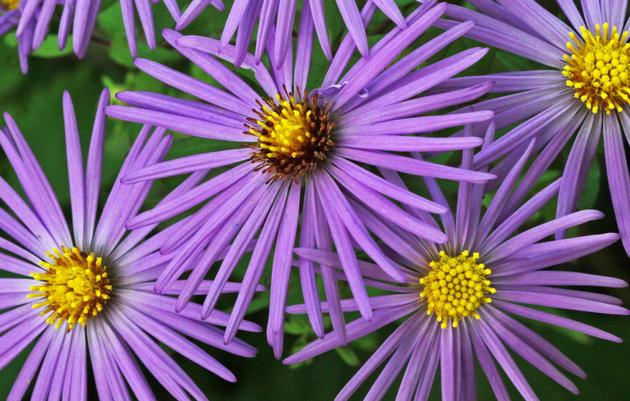 Bird-Friendly Native Plants Lists