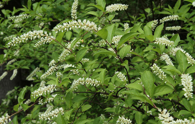 Native Plant Profiles