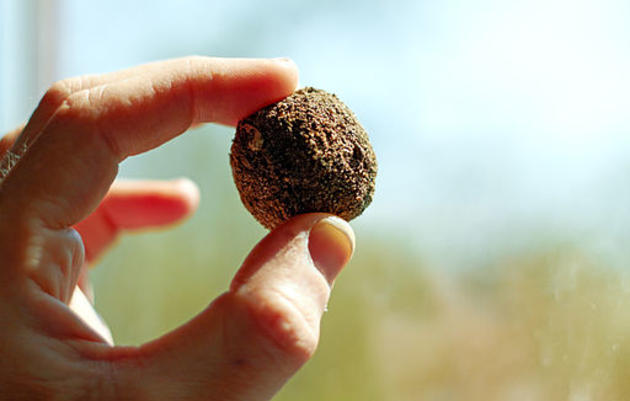 Spread Native Plants with DIY Seed Bombs!