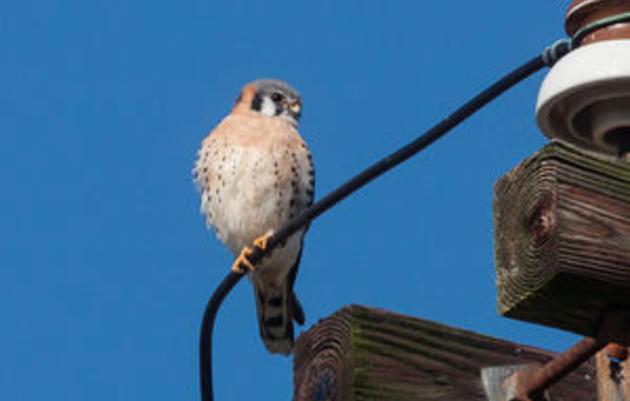 Winston-Salem Journal: Christmas Bird Count is fun, plays vital role