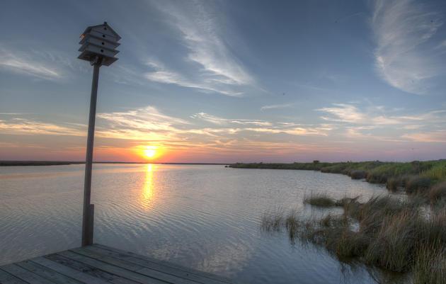Currituck Marshes-Pine Island IBA