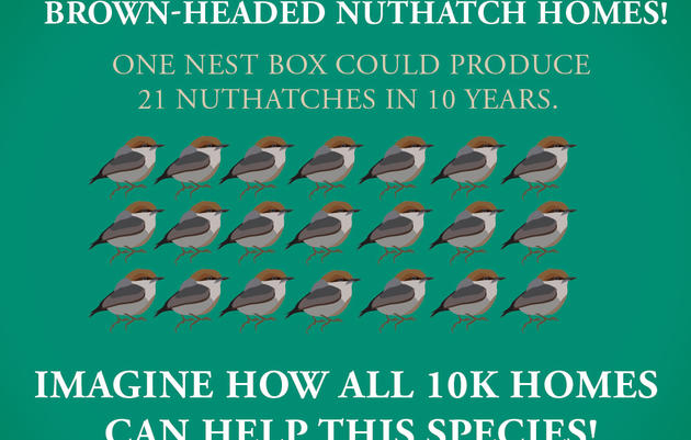 Small Actions = Big Impact for Nuthatches