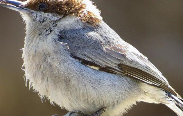 Charlotte Observer: Christmas Bird Count ends with exciting sights