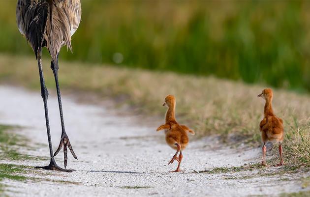 15 Awww-Inspiring Photos of Baby Birds