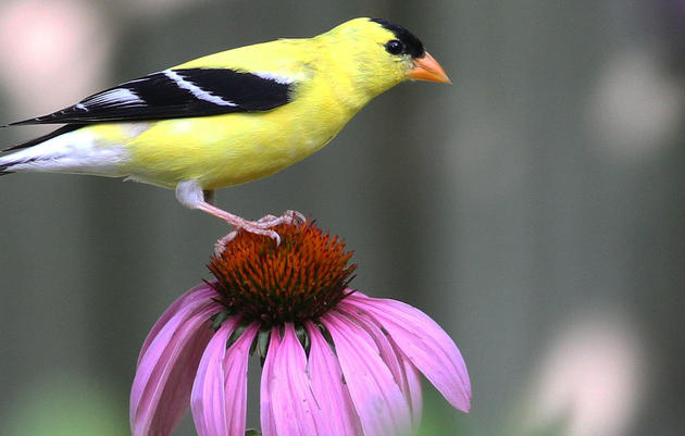 Bird-Friendly Native Plants of the Year Program