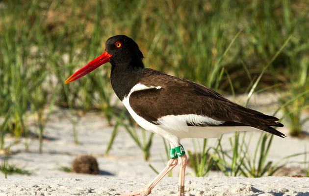 Coastal Birds: Your Top Questions, Answered