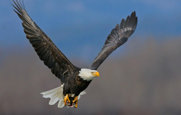 Expanding Bird-Friendly Renewable Energy