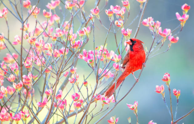 This Stay-home Spring, Birds Sing – and Birders Write Poetry