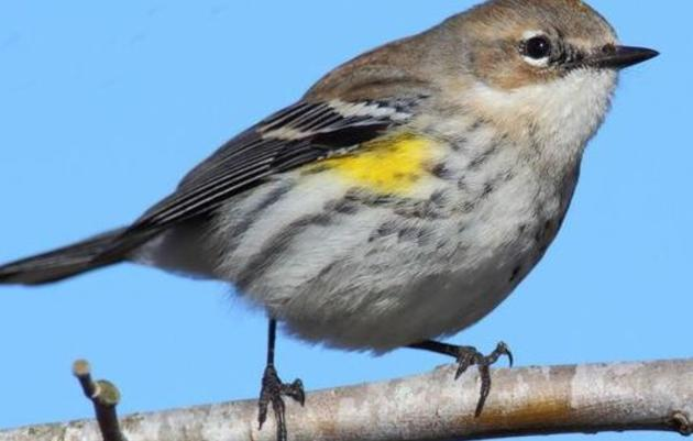Asheville Citizen-Times: WNC takes flight with Christmas Bird Count