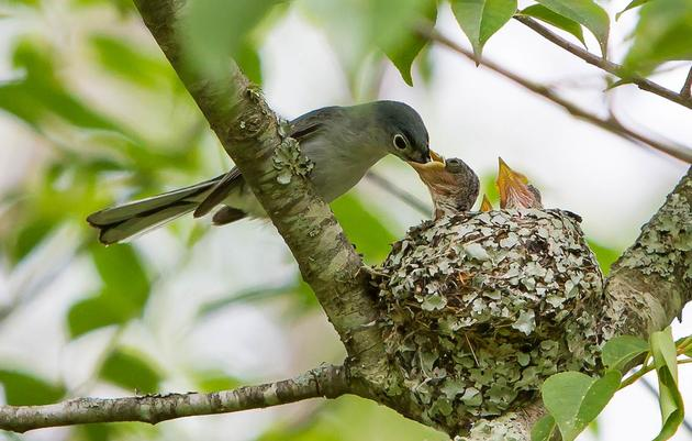 Help Celebrate Success of Nesting Birds