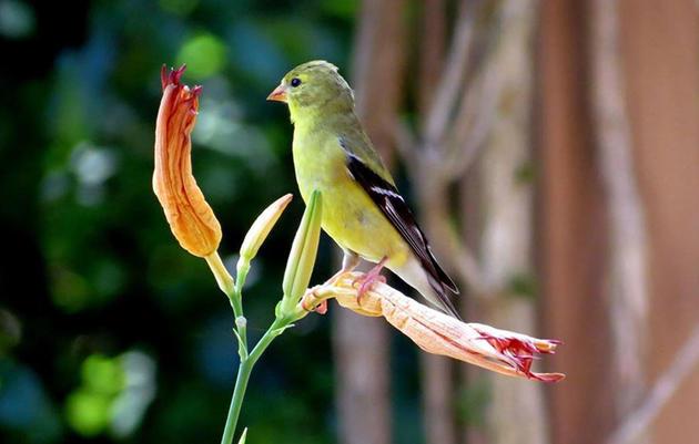 Find the Best Plants for Birds in Your Zip Code