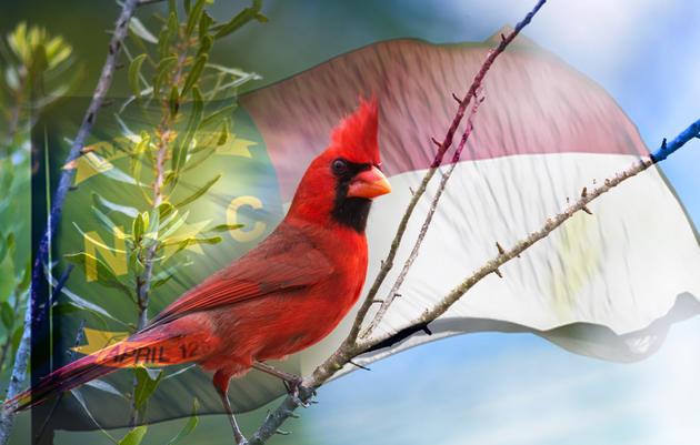 Audubon Flocks to the Capital