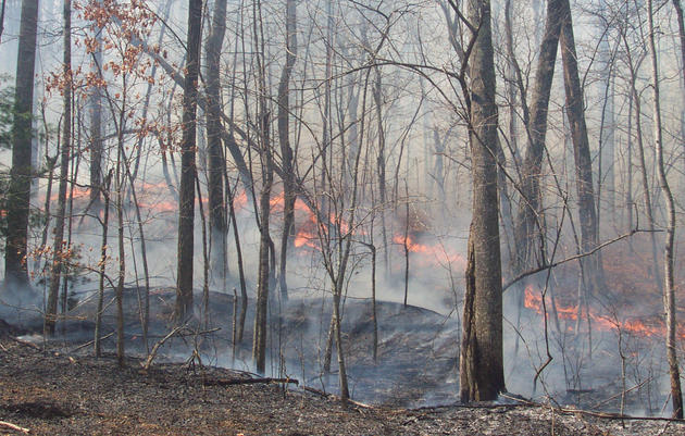 Lighting Fires for Birds and Land in North Carolina