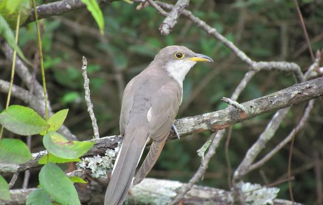 Biodiversity Brings New Birds Home