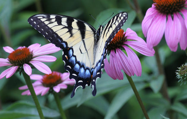 2015 Bird-Friendly Native Plants of the Year List