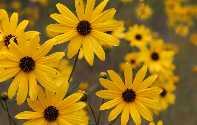 Elect The Bird-Friendly Native Plants of the Year