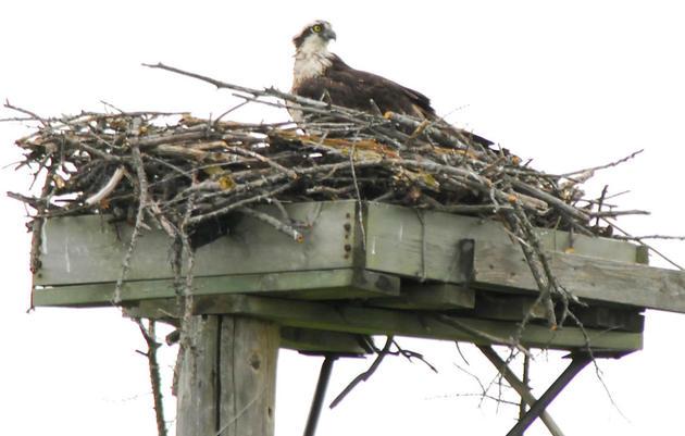 Saving Important Bird Areas
