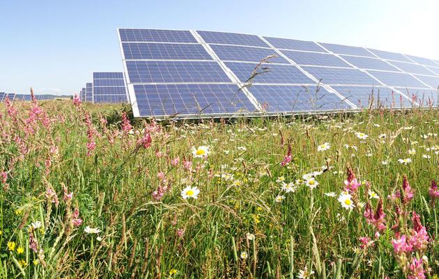 Audubon North Carolina Hails Bipartisan Plan to Double Down on Solar