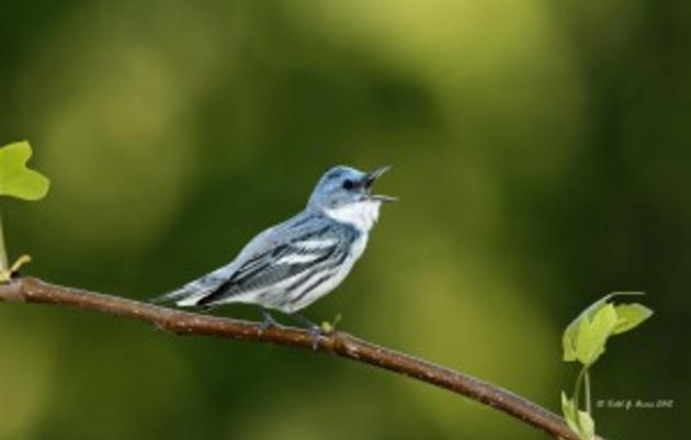 Policy Protections for Birds - Working Lands