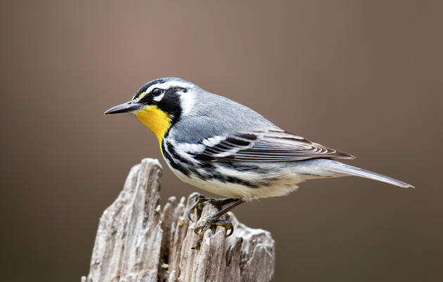A Guide to Fall Migration in the Mountains and Piedmont