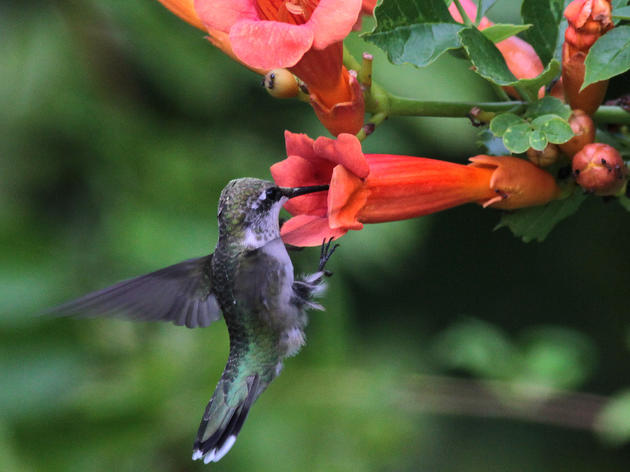 Winston-Salem Journal: Adding bird-friendly native plants helps everyone