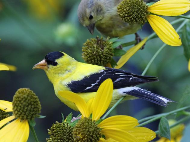 Despite Pandemic, Momentum Builds for Birds at Legislature