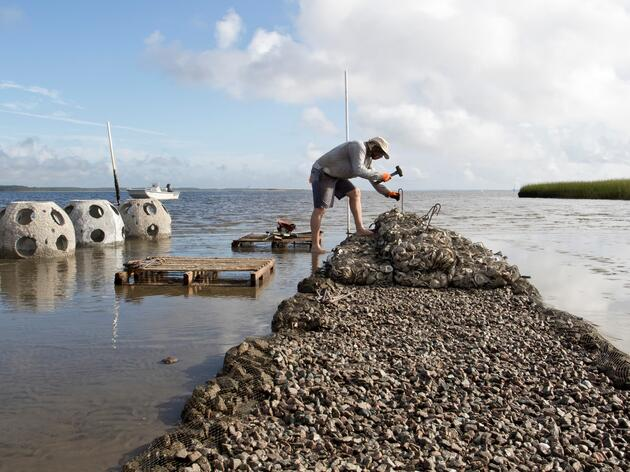 New Oyster Reef Project Bolsters Bird Habitat, Water Quality on the Cape Fear
