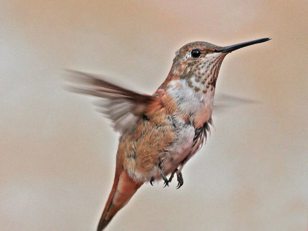 Shared Values: Audubon North Carolina Partners with Communities of Faith