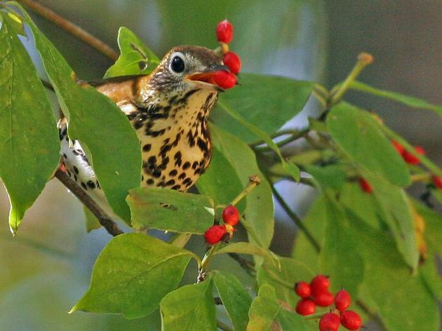WNC Forest Plan 101: What It Means for Birds