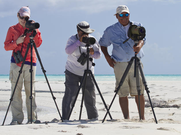 Bahamas Piping Plover Surveys Locate Birds and Strengthen Partnerships