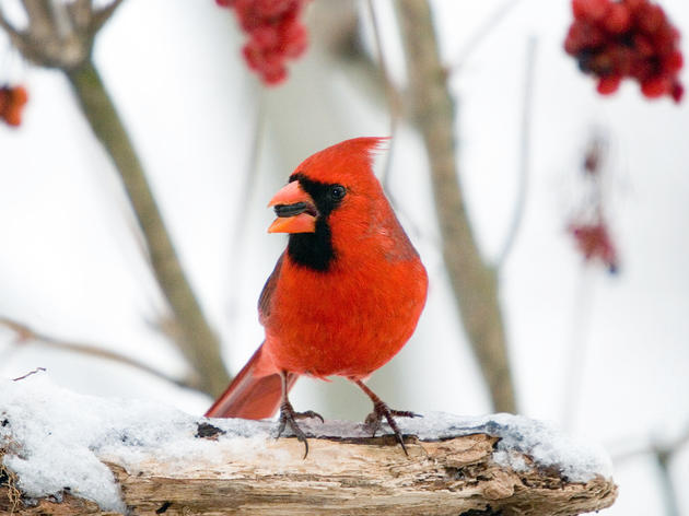 How Your Contributions Helped Birds in 2014