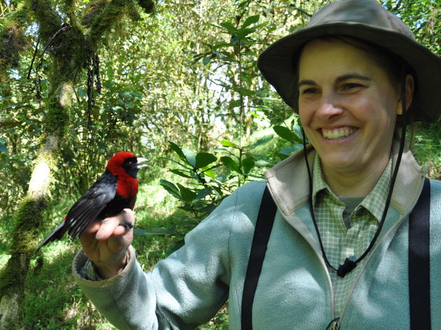 Wintering with Warblers in Nicaragua