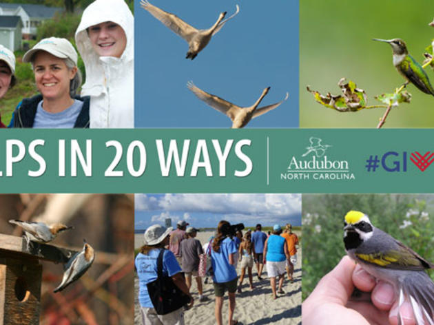 20 Ways $20 Helps Our Birds