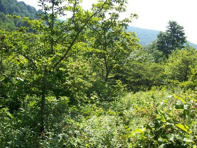 Got shrubland?