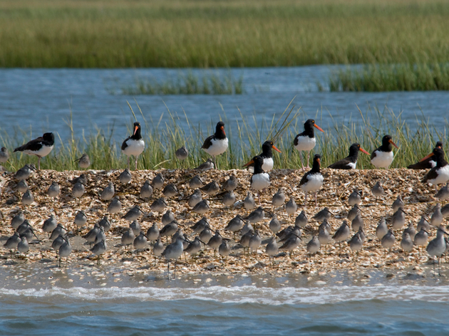A Look Back at 2012 Important Bird Areas of the Month