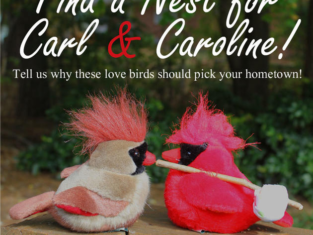 Find a Nest for Carl and Caroline!