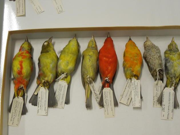Frozen birds have flown the coop!