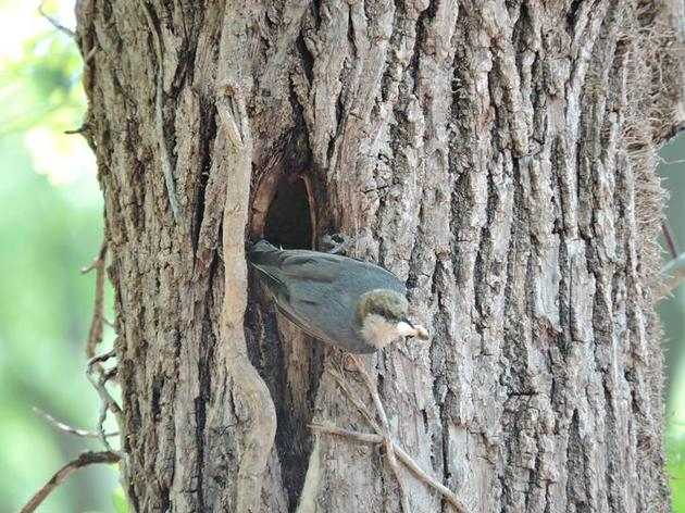 Nest Box Nesting Season - Reports from the field