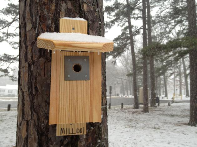 Now is the best time to put up a nest box