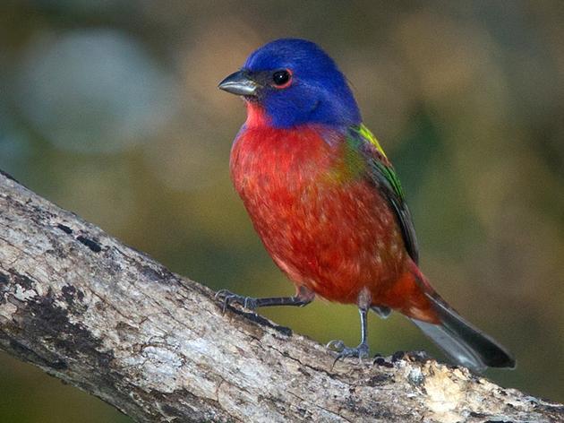 The Bird Reward for Bird-Friendly Landscape Design