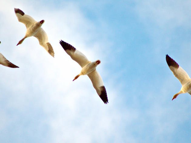 Citizen Science Paves the Way for Advancements in Bird Conservation