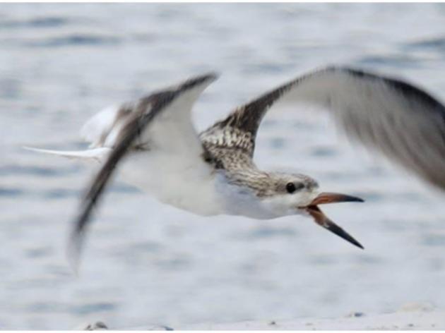 Reflections on a Summer as a Bird Steward