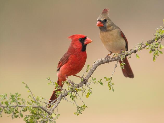 Protecting Birds and Family Landowners