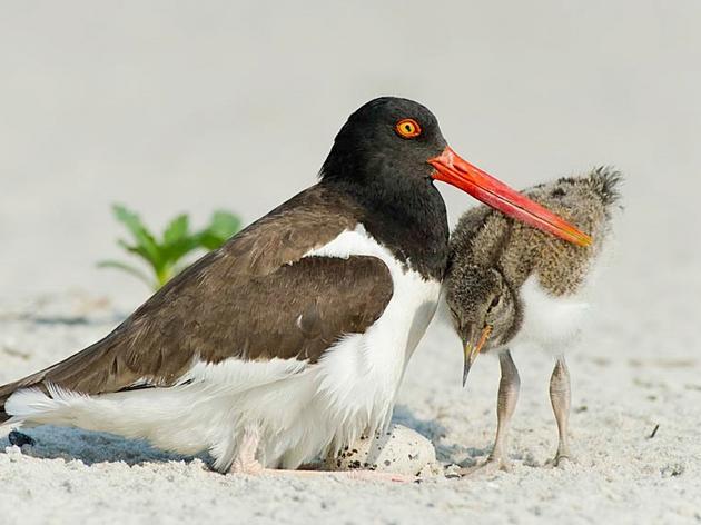 Coastal Nesting Season Recap for 2019
