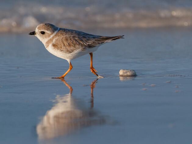 A Fall Guide to Coastal Migration