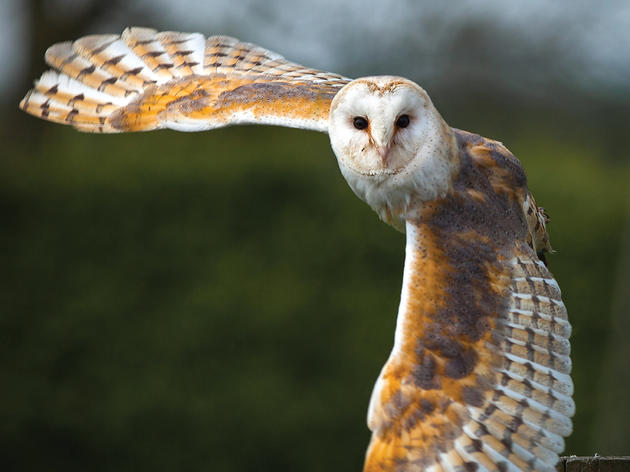 Audubon Meeting to Host Leading National Scientists in North Carolina