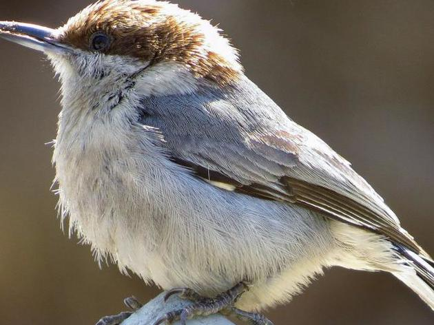 North Carolina's Bird Species Threatened by Global Warming 'Gut Punch' New Audubon Study Reveals