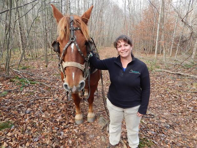 Horse logging in Appalachia