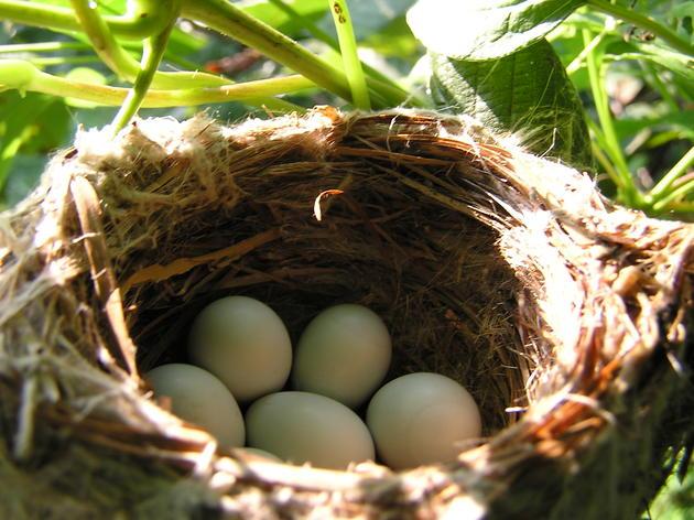 Birds Nest in Odd Places!
